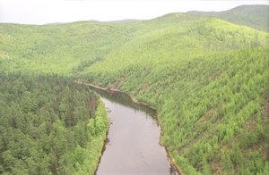 Лесные ресурсы   Межрегиональная ассоциация экономического ...